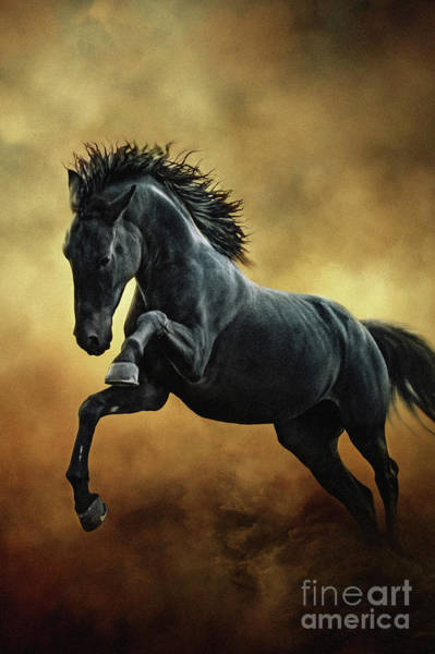 Photograph - The Black Stallion In Dust II by Dimitar Hristov