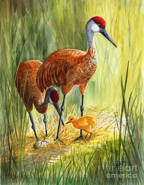 Painting - The Blessed Event - Sandhill Cranes by Marilyn Smith