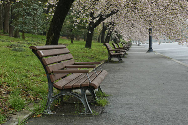 Biota Photograph - The Blossoms And The Bench by Brian Kamprath