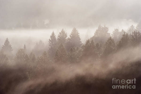 Trees Wall Art - Photograph - The Blow Of The Forest by Yuri San