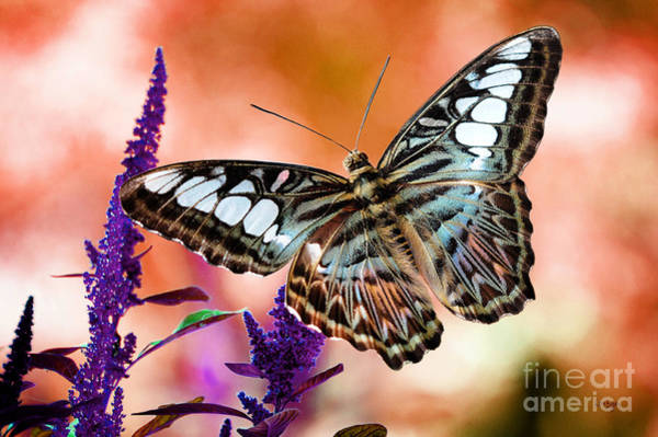 Photograph - The Blue Clipper by Lois Bryan
