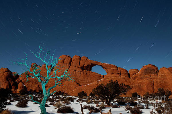 Star Trails Photograph - The Blue Tree by Keith Kapple