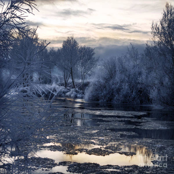 Wall Art - Photograph - The Blue Winter by Angel Ciesniarska