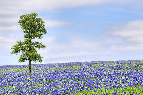 Photograph - The Bluebonnet Trail In Ennis Texas by JC Findley