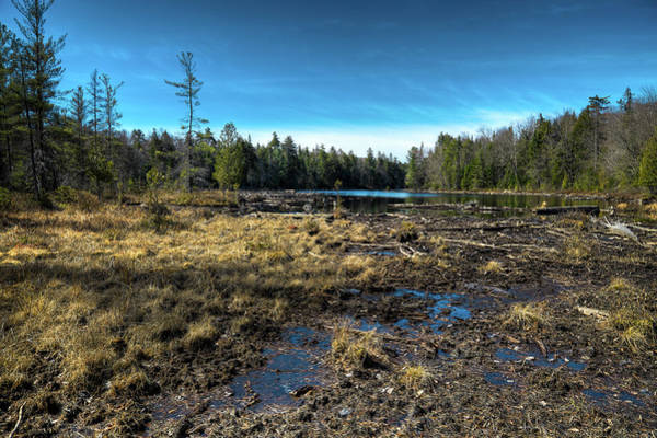 Chain Of Lakes Photograph - The Bog by David Patterson