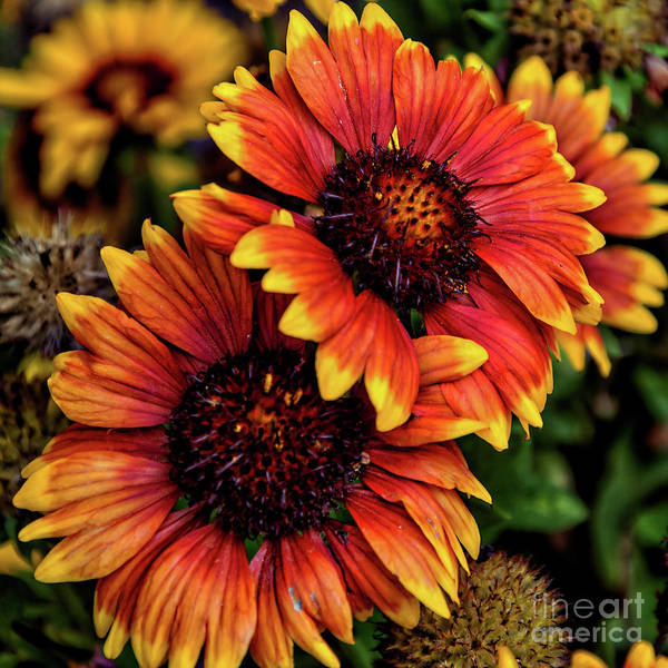 Photograph - The Bold And Beautiful Pair by Kirt Tisdale