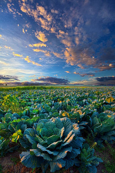 Photograph - The Bounty by Phil Koch