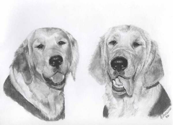 Golden Retriever Drawing - The Boys by Marlene Piccolin