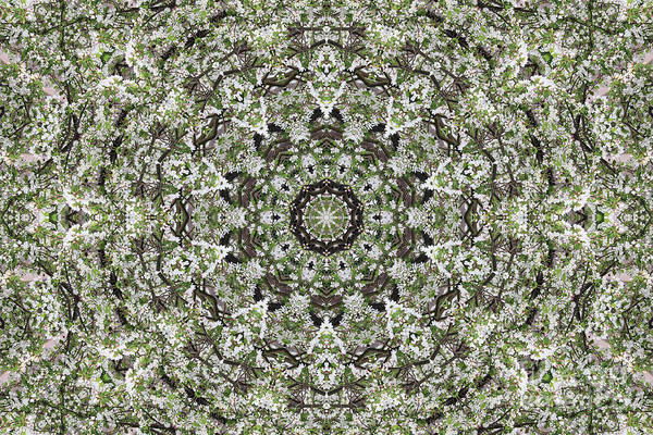 Digital Art - The Branch Kaleidoscope by Donna L Munro