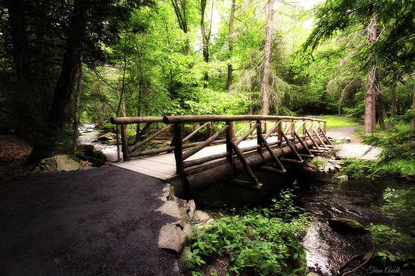 Photograph - The Bridge Through The Woods by Trina Ansel