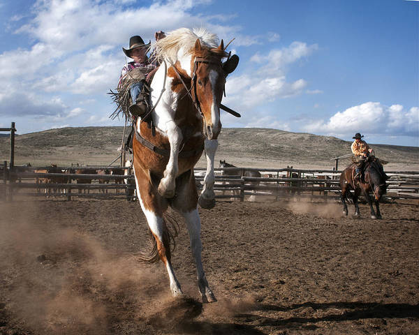 Photograph - The Buckout At Sombrero Ranch by Pamela Steege