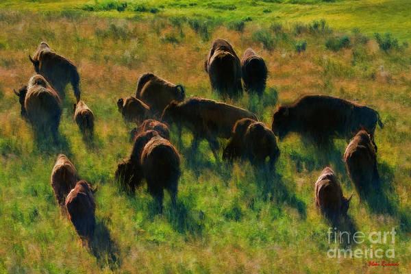 Photograph - The Buffalo Herd by Blake Richards