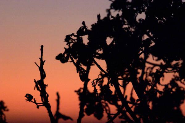 Photograph - The Burning Bush by Brad Scott