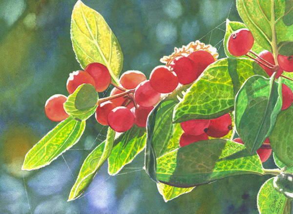 Painting - The Bush With The Red Berries by Catherine G McElroy