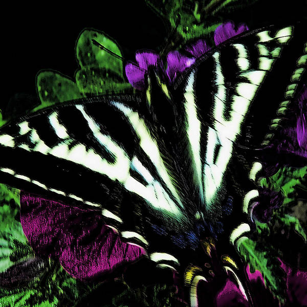 Photograph - The Butterfly by David Patterson