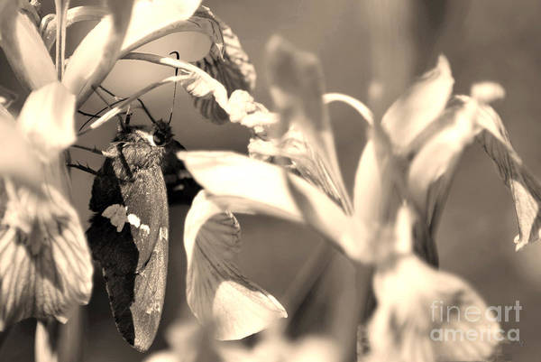 Photograph - The Butterfly by Donna Greene