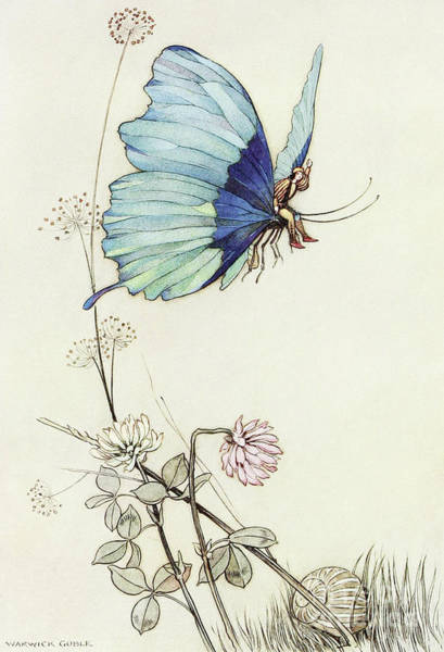 Wing Back Wall Art - Drawing - The Butterfly Took Wing, And Mounted Into The Air With Little Tom Thumb On His Back by Warwick Goble