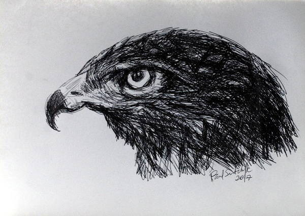 Drawing - The Buzzard by Paul Sutcliffe