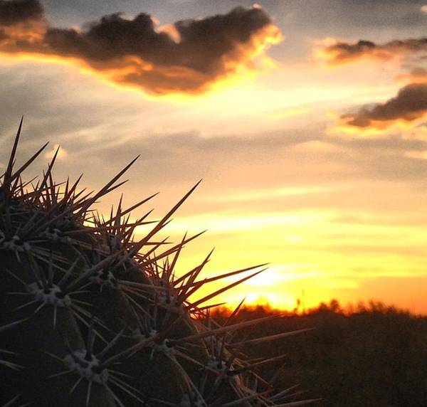 Pokes Wall Art - Photograph - The Cactus Way by Chereece Smyser
