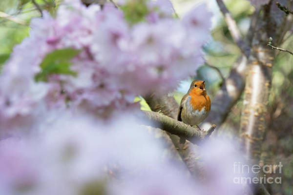 Photograph - The Call Of Spring by Tim Gainey