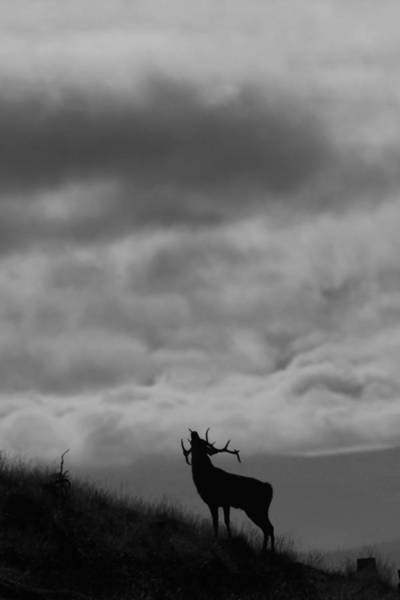Photograph - The Call Of The North by Gavin MacRae
