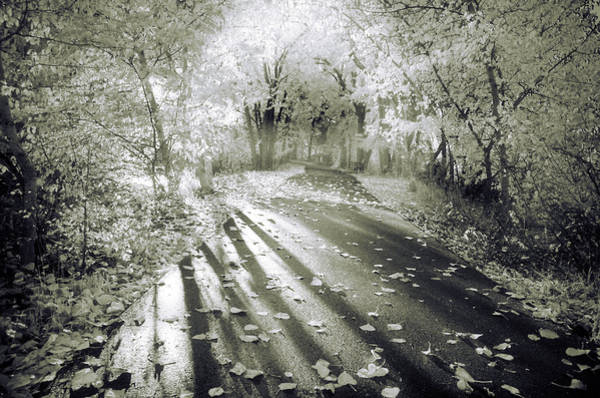 Photograph - The Calm In Shadows And Light by Tara Turner