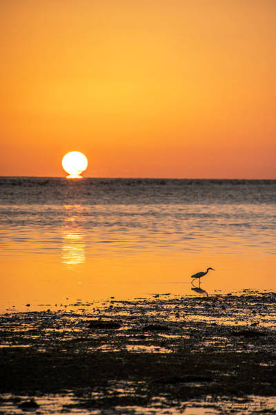 Shore Bird Photograph - The Calm Side by Marvin Spates