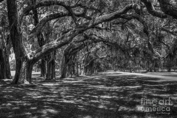 Photograph - The Canopy Bw Ave Of Oaks Retreat Plantation Art by Reid Callaway