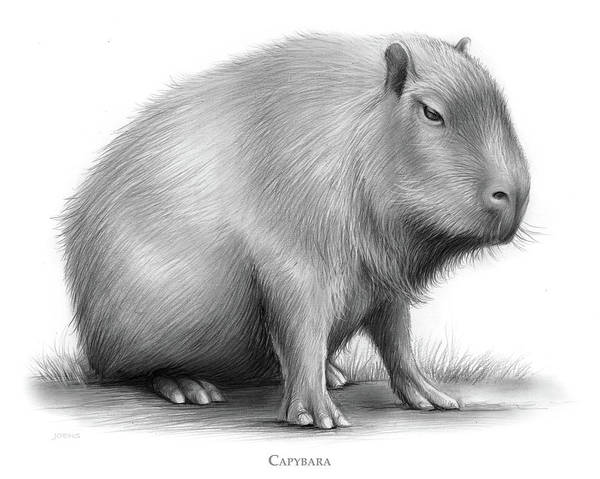 Wall Art - Drawing - The Capybara by Greg Joens