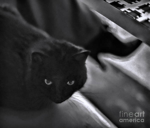 Photograph - The Cat In The Cafe II by Jeff Breiman