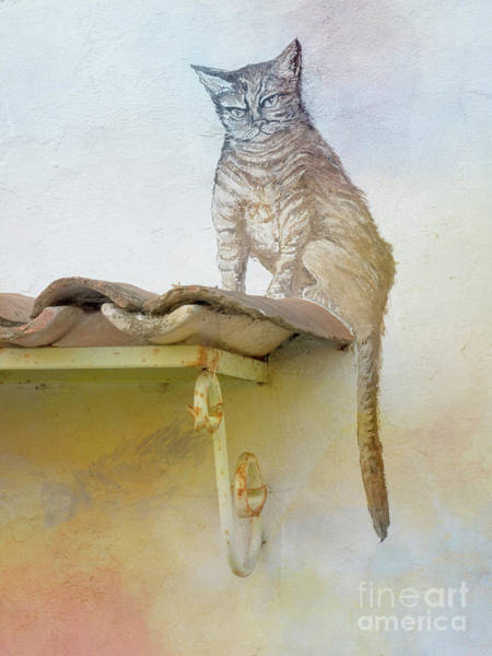 Wall Art - Photograph - The Cat On The Roof Mural by Heiko Koehrer-Wagner