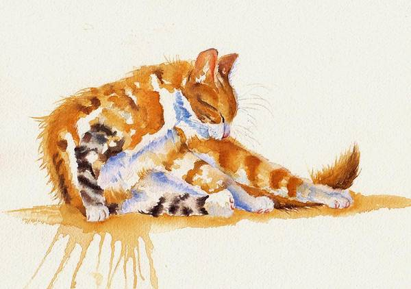 Wall Art - Painting - The Cat-ortionist by Debra Hall