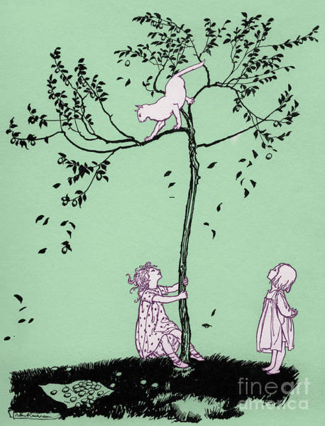 Wall Art - Drawing - The Cat Ran Up The Plum Tree  by Arthur Rackham