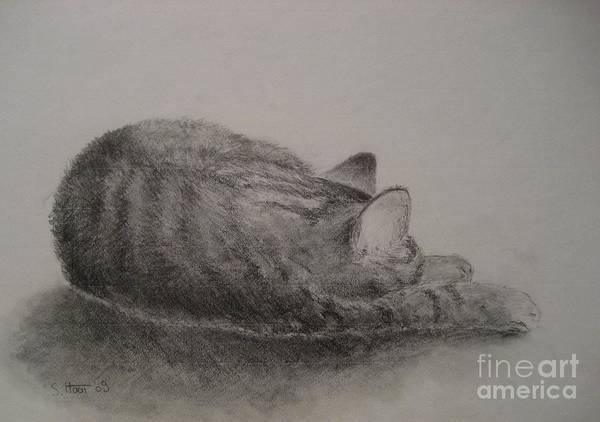 Wall Art - Drawing - The Cat Series II by Sabina Haas