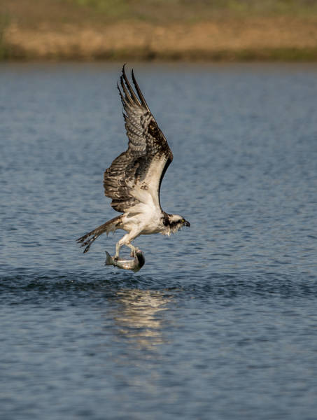 Photograph - The Catch by Loree Johnson
