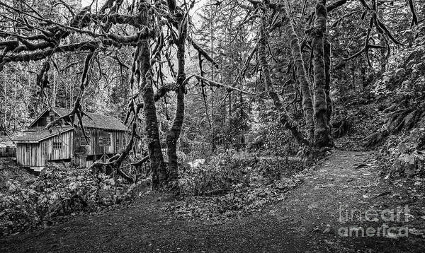 Wall Art - Photograph - The Cedar Creek Mill Trail by Jamie Pham