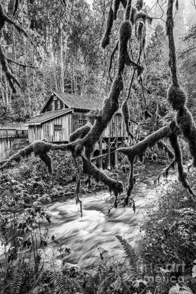 Wall Art - Photograph - The Cedar Mill And Moss by Jamie Pham