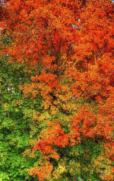 Photograph - The Changing Leaves by Sam Davis Johnson