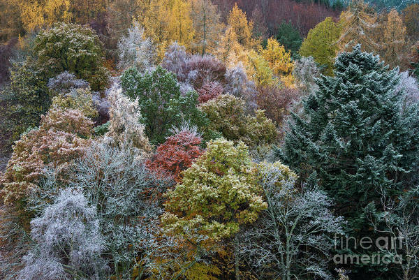 Icy Leaves Wall Art - Photograph - The Changing Season by Tim Gainey