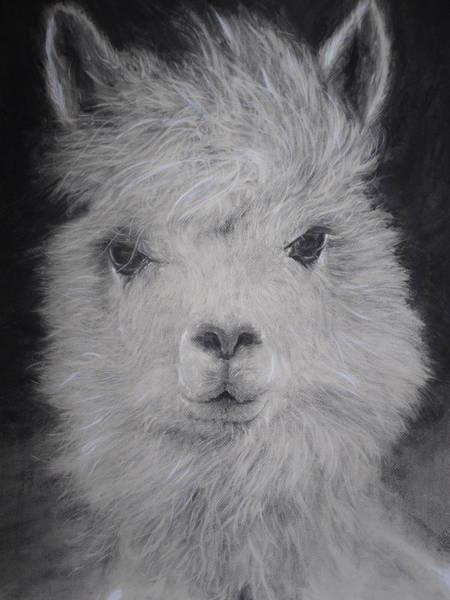 Wa Drawing - The Charming Llama by Adrienne Martino