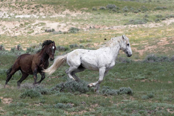 Photograph - The Chase by Ronnie and Frances Howard