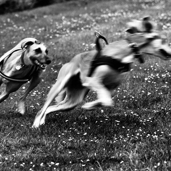 The Chasing Game. Ava Loves Being Art Print