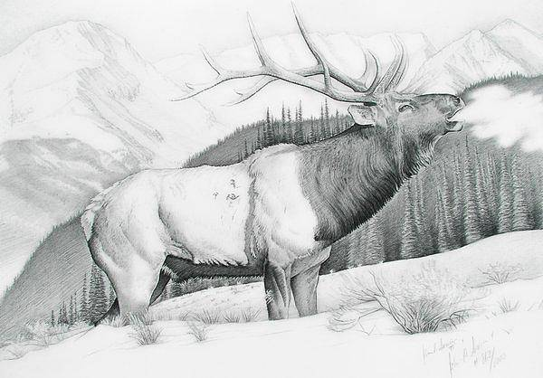 Elk Mountain Drawing - The Chlydesdale by John Senior