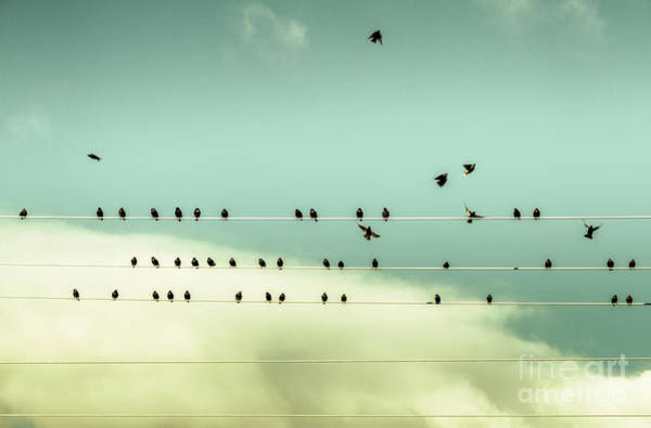Photograph - The Chorus Of Birds by Jorgo Photography - Wall Art Gallery