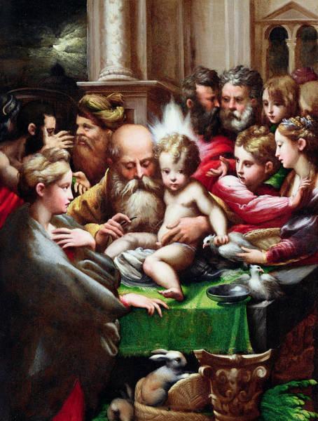 Sixteenth Wall Art - Painting - The Circumcision by Francesco Mazzola  Parmigianino