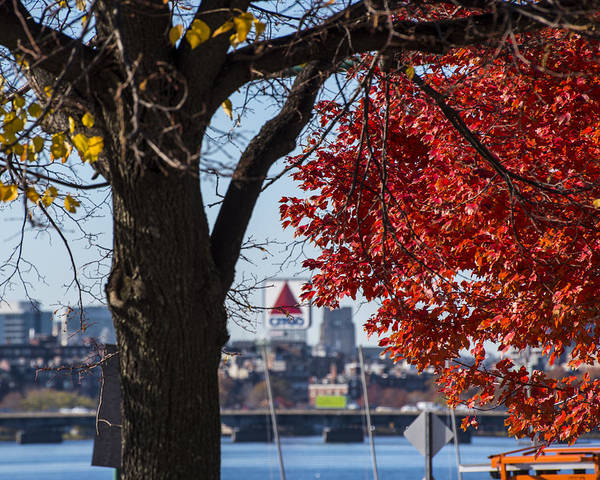The Citgo Sign Through The Trees Boston Ma Charles River Art Print