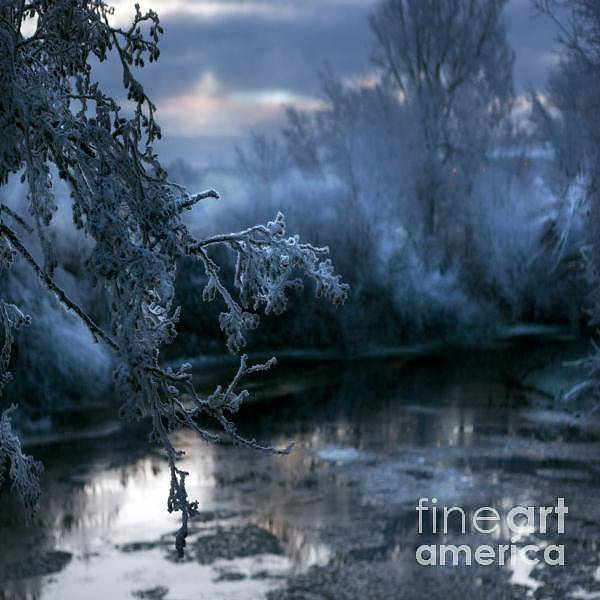 Wall Art - Photograph - The Cold Blue by Angel Ciesniarska