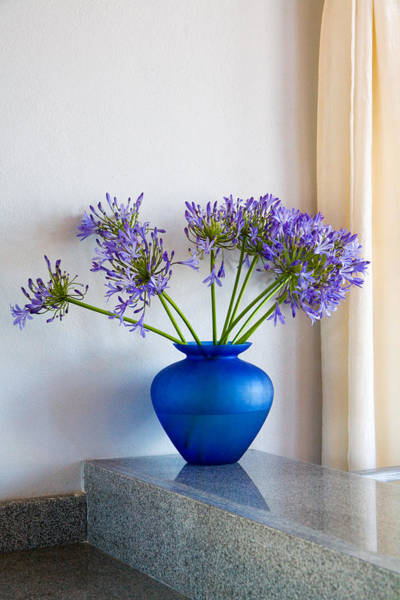Agapanthus Photograph - The Color Blue by Eggers Photography