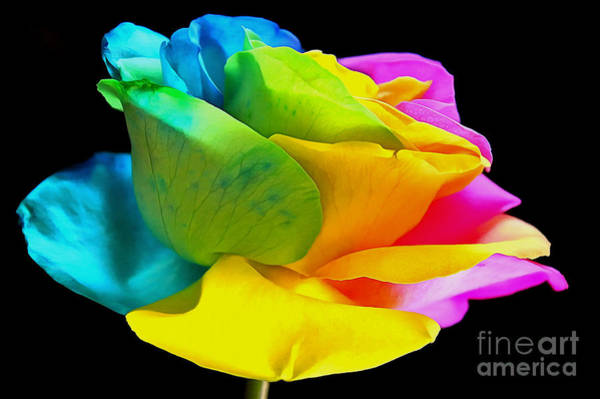 Rainbow Rose Wall Art - Photograph - The Color Of Love by Krissy Katsimbras