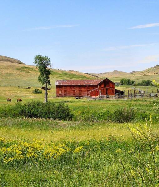 Photograph - The Color Of Montana by Susan Kinney